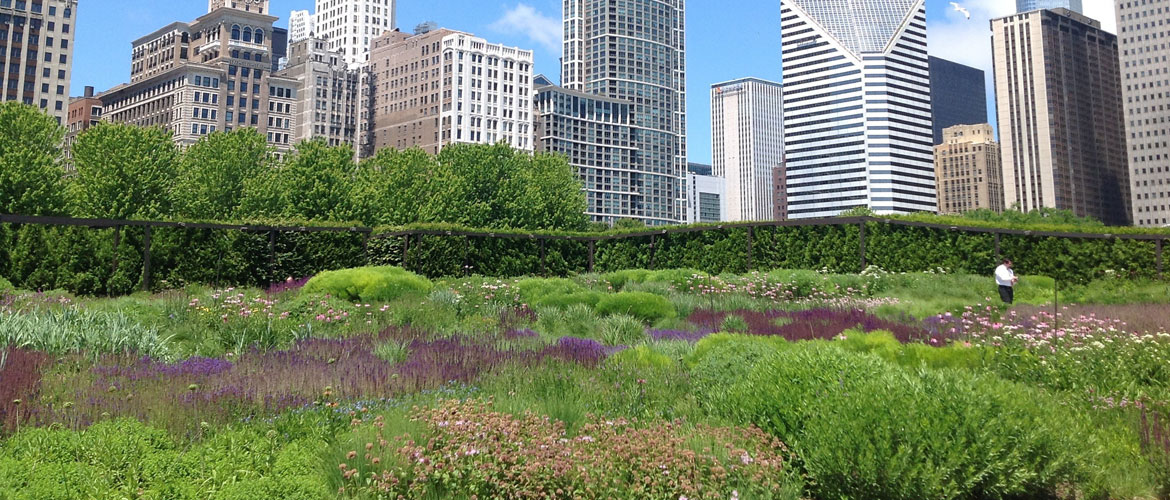 Eight amazing green roofs in chicago ecovision - Ecovision homes ...